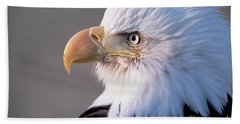 Bald Eagle Portrait Alaska Hand Towel