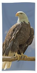 Bald Eagle Portrait Bath Towel