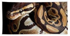 Hand Towel featuring the photograph Ball Python Python Regius by David Kenny