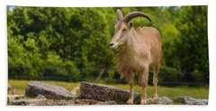 Barbary Sheep Hand Towel