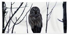 Barred Owl 4 Hand Towel by Steven Clipperton