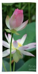 Beautiful Lotus Blooming Hand Towel