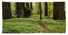 Beauty Of California Redwoods 1 Hand Towel