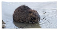 Beaver Chewing On Twig Hand Towel