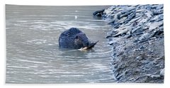 Beaver Chews On Stick Hand Towel by Chris Flees