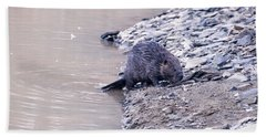 Beaver On Dry Land Hand Towel by Chris Flees