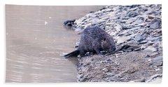 Beaver On Dry Land Hand Towel