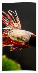 Betta Fish 3 Hand Towel by Lisa Brandel