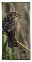 Hand Towel featuring the photograph Big Dinner For Female Red Winged Blackbird II by Patti Deters