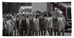 Big Horn Sheep Road Block Bath Towel