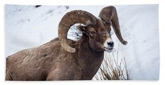 Bighorn Ram Bath Towel