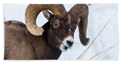 Bighorn Sheep Bath Towel