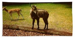 Billy Goat Keeping Lookout Hand Towel by Amazing Photographs AKA Christian Wilson