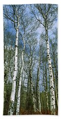 Birch Trees In A Forest, Us Glacier Hand Towel