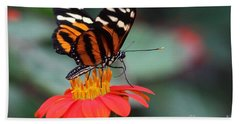 Bath Towel featuring the photograph Black And Brown Butterfly On A Red Flower by Jeremy Hayden