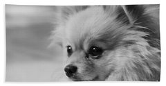 Black And White Portrait Of Pixie The Pomeranian Hand Towel