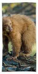 Hand Towel featuring the photograph Black Bear by Doug Herr