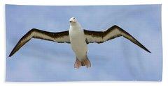 Black-browed Albatross Flying Hand Towel by Yva Momatiuk John Eastcott