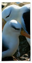 Black Browed Albatross Pair Hand Towel by Amanda Stadther
