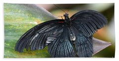 Bath Towel featuring the photograph Black Butterfly by Jeremy Hayden