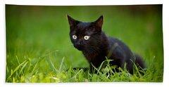 Black Kitten Hand Towel