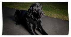 Black Labrador Retriever Lying Down Hand Towel
