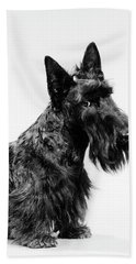 Black Scottie Scottish Terrier Dog Hand Towel