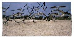 Black Skimmers Rynchops Niger Flying Bath Towel