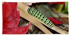 Black Swallowtail Butterfly Caterpillar Hand Towel