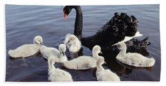 Black Swan And Cygnets Hand Towel