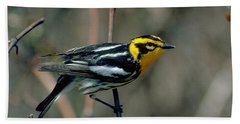 Blackburnian Warbler Hand Towel by Doug Herr