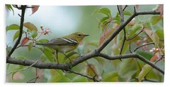 Blackpoll Warbler In The Fall Bath Towel