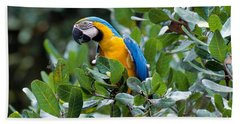 Blue And Yellow Macaw Hand Towel by Art Wolfe