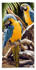 Blue And Yellow Macaw Pair Hand Towel