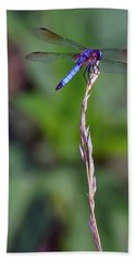 Blue Dragonfly On A Blade Of Grass  Bath Towel by Chris Flees