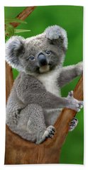 Blue-eyed Baby Koala Bath Towel