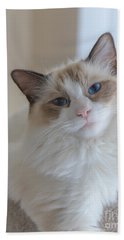 Blue-eyed Ragdoll Kitten Hand Towel
