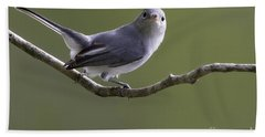 Blue-gray Gnatcatcher Hand Towel by Meg Rousher