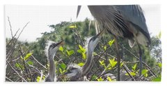 Bath Towel featuring the photograph Blue Heron Family by Ron Davidson