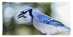 Blue Jay Bird Hand Towel by Elena Elisseeva