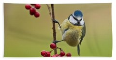Blue Tit With Hawthorn Berries Bath Towel