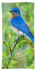 Bluebird Joy Hand Towel by William Jobes