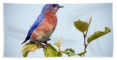 Bluebird On Top Hand Towel by Kerri Farley