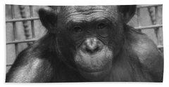 Bonobo Hand Towel by Dan Sproul