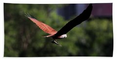 Brahminy Kite With Catch  Bath Towel