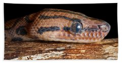 Bath Towel featuring the photograph Brazilian Rainbow Boa Epicrates Cenchria by David Kenny