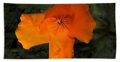 Bright California Poppy Hand Towel by Phyllis Denton