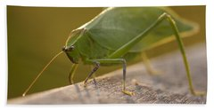 Broad-winged Katydid Hand Towel by Meg Rousher