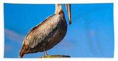 Hand Towel featuring the photograph Brown Pelican - Pelecanus Occidentalis by Carsten Reisinger