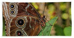 Hand Towel featuring the photograph Blue Morpho Butterfly by Olga Hamilton